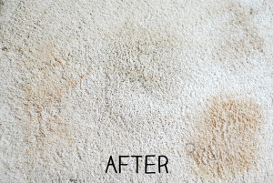 How to make a carpet stain remover (Homemade)