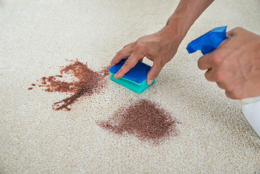 Magical Homemade Solution To Remove Carpet Stains Quickly