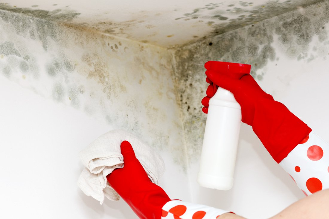 How To Get Rid Of Mold And Mildew From Walls And Ceilings