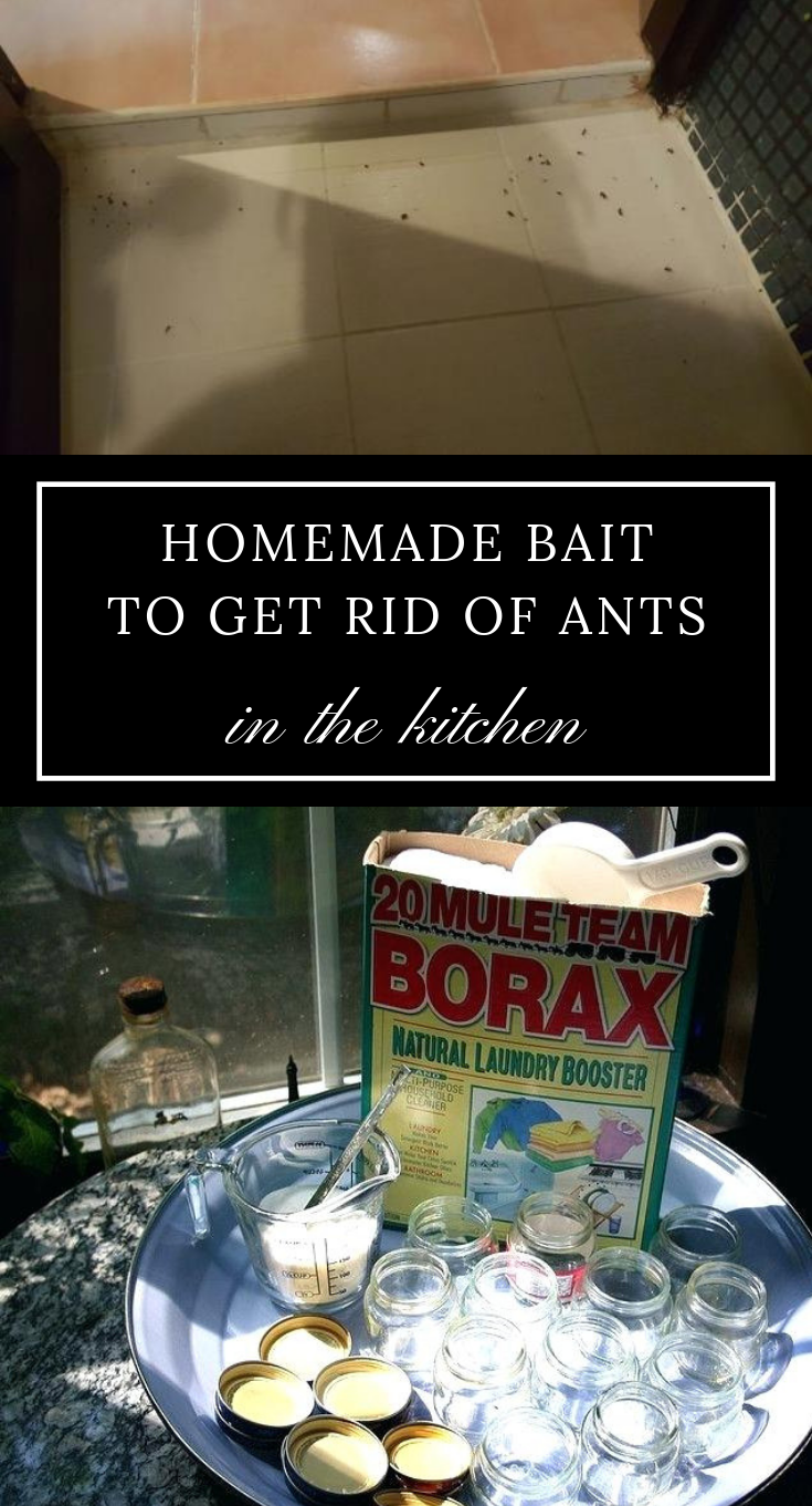 homemade bait to get rid of ants in the kitchen. Black Bedroom Furniture Sets. Home Design Ideas