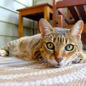 How To Remove Pet Stains & The Odor From The Carpet